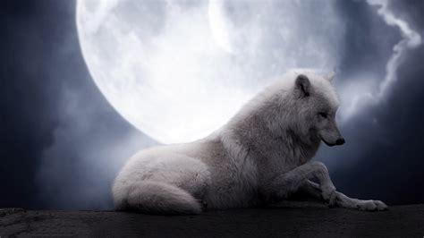 imagenes de lobos llorando reino de vii el lobo