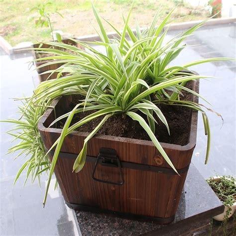vasi per terrazzo vasi da terrazzo vasi per piante tipologie vaso