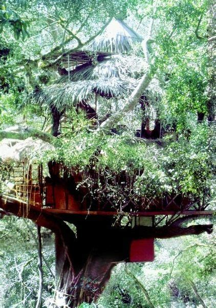treehouse kerala 188 best images about tree house on trees a