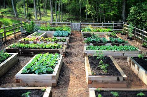joe gardener organic gardening   pro