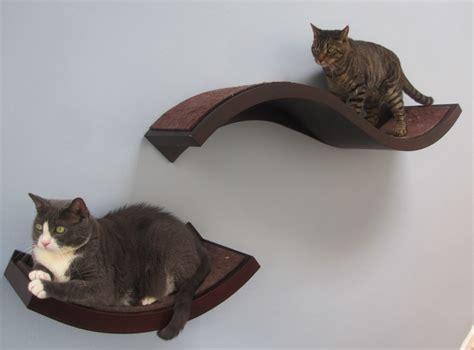 decorating with cat s i cat
