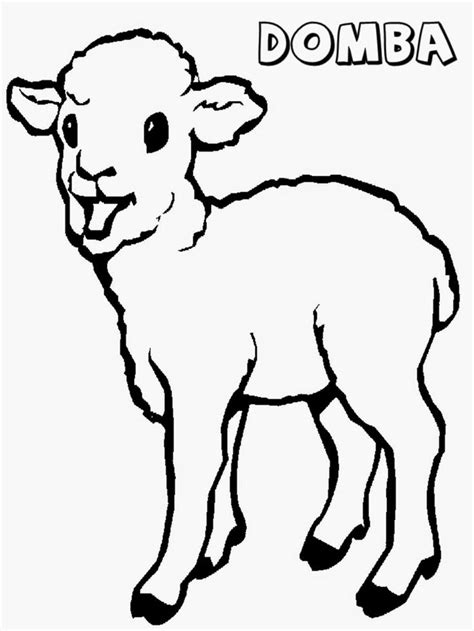 mewarnai gambar anak domba anak binatang binatang lucu