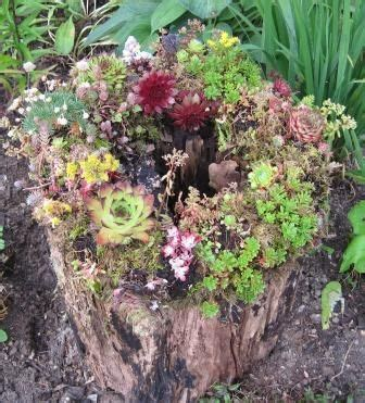 what to do with plant stump as christmas decoration outdoors 1000 images about succulent containers on gardens projects and pallet walls