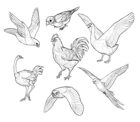how to draw doodle birds how to draw birds step by step