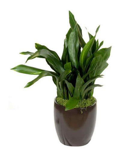 low light outdoor plants low light indoor plants www garden design me