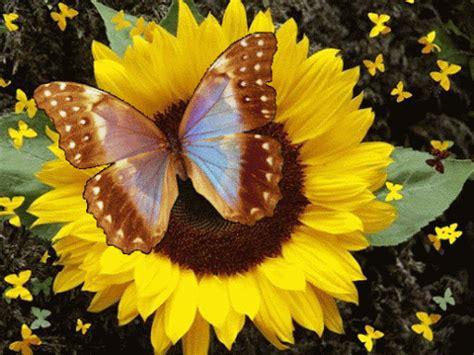 imagenes rosas gif imagenes gifs mariposas y flores gifs