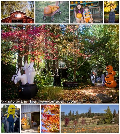 1000 images about nevada city fall colors on pinterest