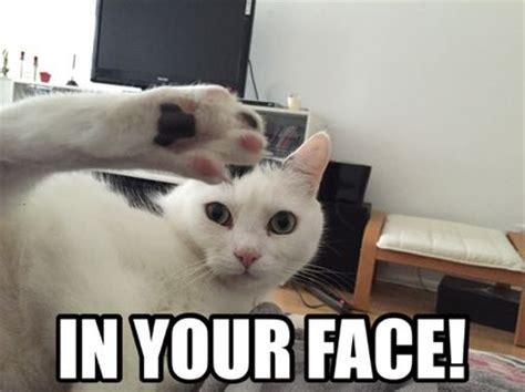 Katzen Meme - 14 best images about katzen memes on pinterest so tired