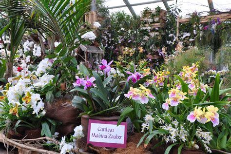 orchideen garten neue orchideen sorte ʻmainau zauber' insel mainau