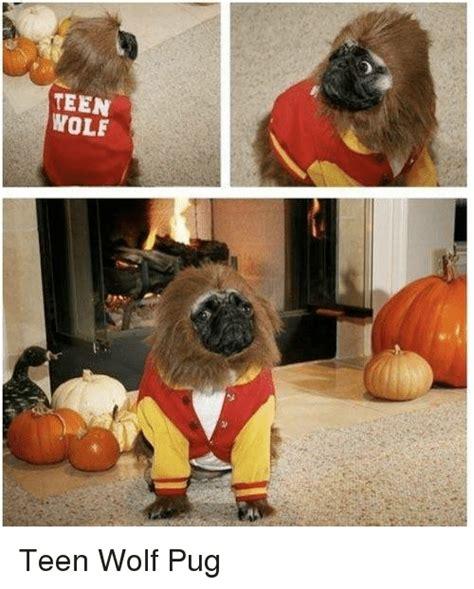 wolf pug 25 best memes about pug pug memes