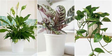 indoor plants no light awesome indoor plants no light gallery interior design