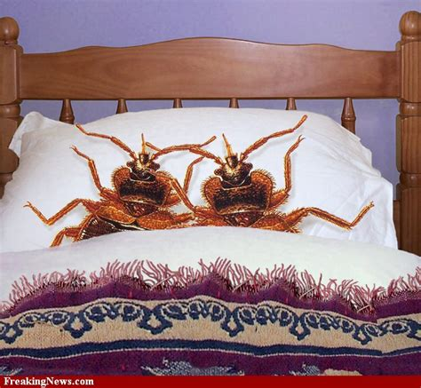 funny bed bed bugs funny quotes quotesgram