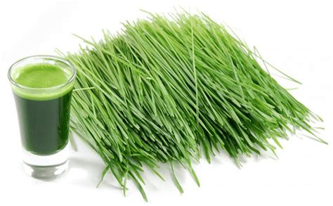 Wellness Wheat Grass 7 healthy benefits of wheat grass inspiremyworkout a collection of fitness quotes