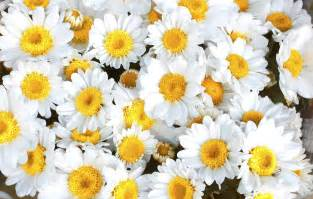 Flowers names in english in english flowers names in english