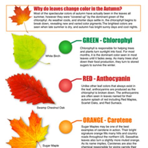 do change color why do leaves change color in the fall sciencebob