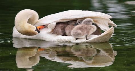 imagenes asombrosas en el mundo 8 cosas asombrosas que los padres hacen por sus cr 237 as en