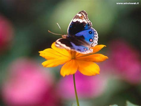 imagenes de mariposas national geographic il mio mondo farfalle