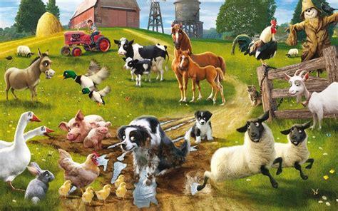 farm animals wallpaper  images