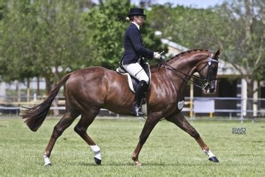 Ah Hoy Ride A Pony Theitlistscom 2 by Five Minutes With Showing Superstar Montgomery