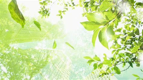 zimmerpflanze große blätter die 69 besten gr 252 ne hintergrundbilder