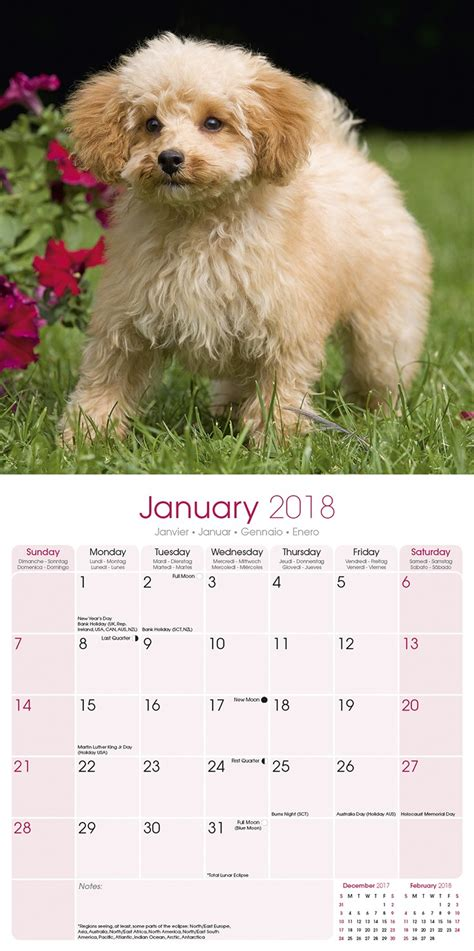 poodles mini wall calendar 2018 16 month calendar books miniature poodle calendar 2018 30484 18 breeds