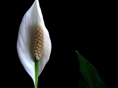 plants  grow indoors  air purification