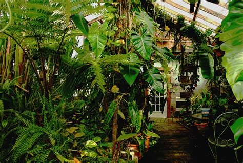 House Design Inside Garden by Build Your Own Tropical Rain Forest Exotic Rainforest