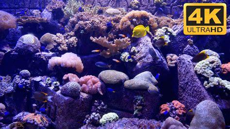 watch online fish tank 2009 full hd movie official trailer 4k aquarium screensaver and tv wallpaper youtube