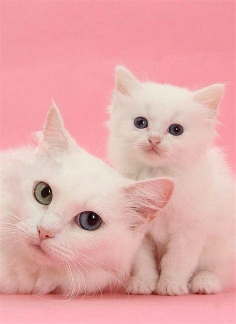 Cats Pink 4057 best images about cats and other fabulous