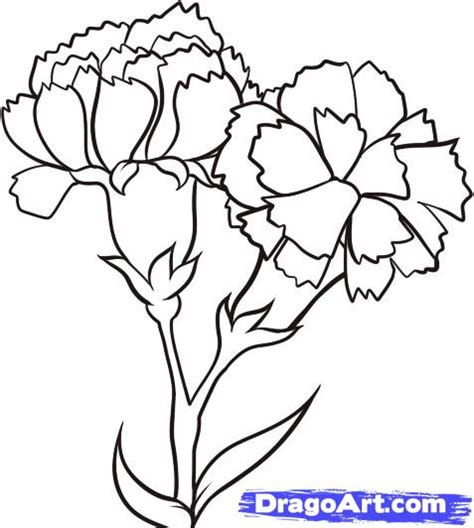 how to draw carnations step by step flowers pop culture