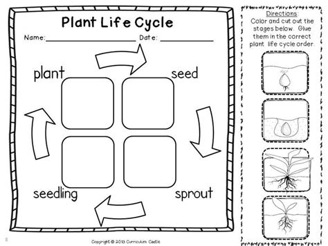 free printable animal life cycle worksheets free printable plant life cycle worksheets search
