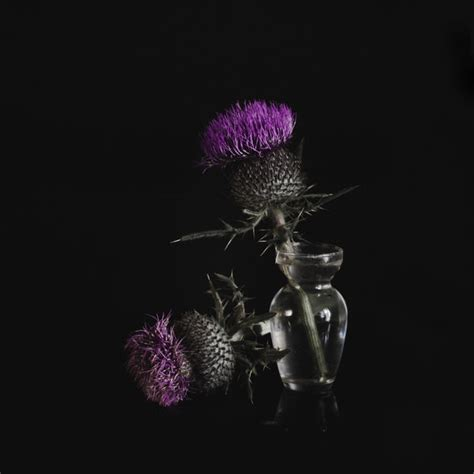 plants that grow in dark rooms the whisper of dying flowers in my dark room by