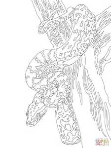 african rock python coloring page gallery
