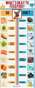 what people food can dogs eat an infographic petcarerx