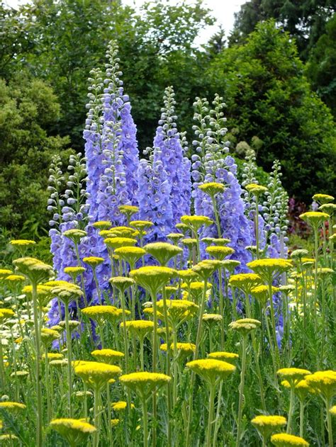 backyard flowers summer backyard cottage with delphinium start a easy