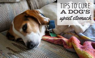 what to give puppy for upset stomach tips to cure your s upset stomach caninejournal