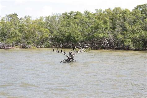 everglades airboat tours near naples fl birds in the everglades picture of southwest florida