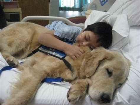 canine comforts kids with cute animals cute pictures cute animal