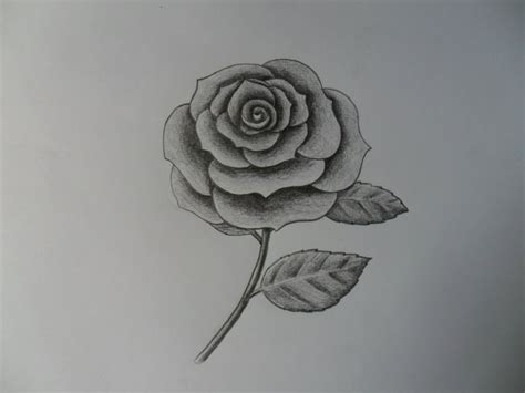 imagenes de una rosa para dibujar faciles como dibujar una rosa improvis 225 ndola youtube