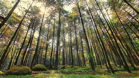 hutan pinus ala twilight  imogiri  jogja