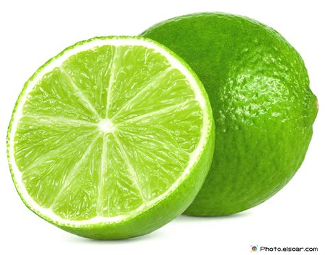 fresh lime  slices wonderful collection elsoar