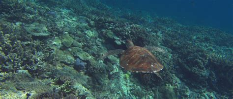 conservation  endangered species wwf wwf australia
