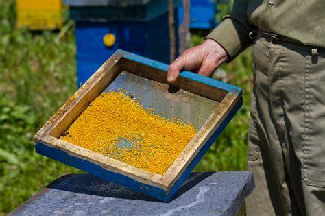 polen görlitz pčelinji polen mnogo razloga da ga prigrlite