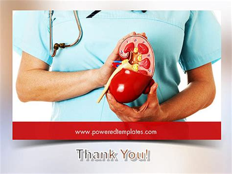 kidney themes for powerpoint kidney health powerpoint template backgrounds 11595