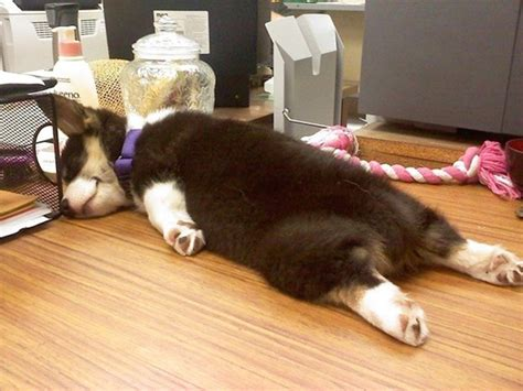 working puppy everyday should be take your to work day
