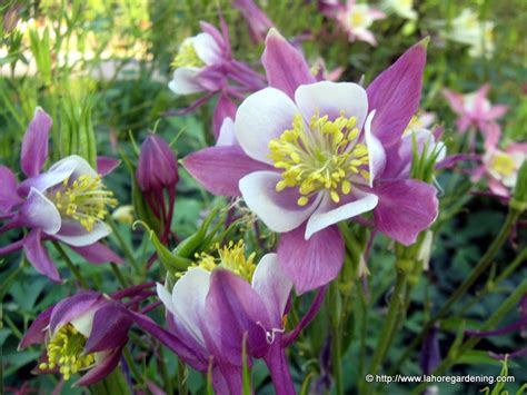 winter and spring flowering annuals