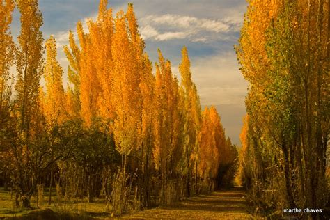 imagenes de otoño en mendoza fotografiapersonalizada martha oto 209 o en mendoza