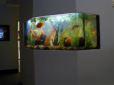 ideas for modern minimalist white frame fish aquarium in home as well as tv cabinet plus lcd tv furniture