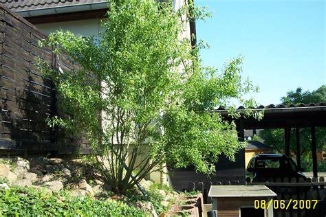 garten leipzig schönefeld kaufen baum f 252 r terrasse terrasse und balkon mit pflanzen und