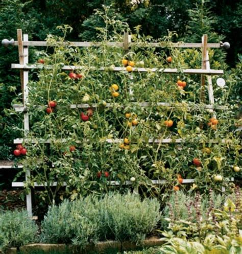 backyard tomato garden diy trellis ideas for tomatoes going home to roost from